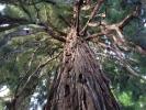 Trees in the city - A la découverte tot le matin